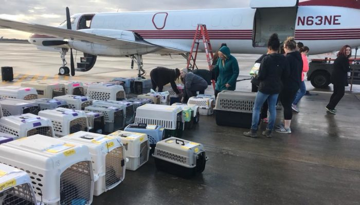 Acadiana Animal Aid partners with Wings of Rescue to save over 200 lives