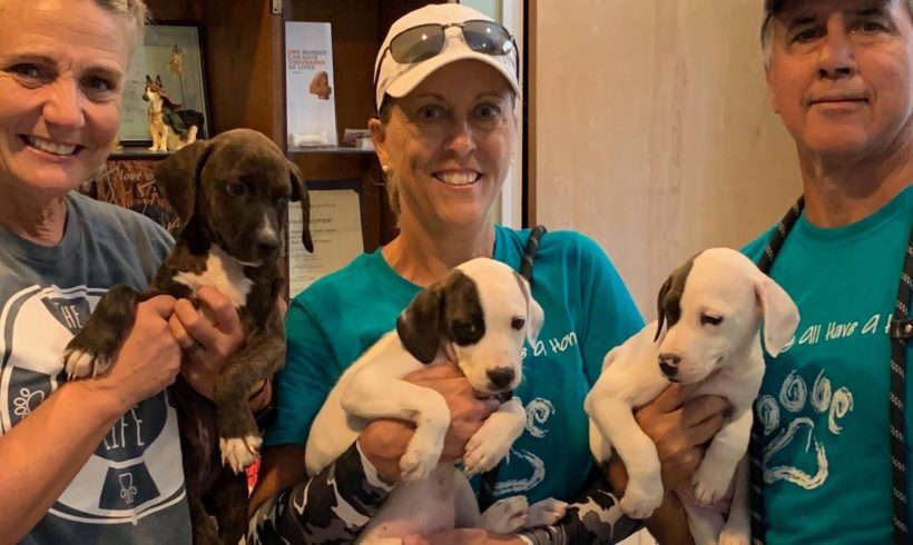AAA Receives $20,000 Grant from ASPCA
